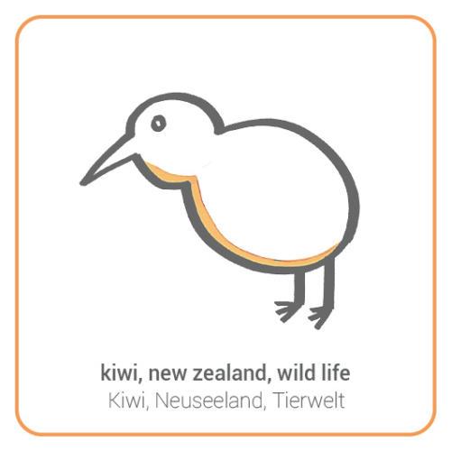 kiwi, new zealand, wild life